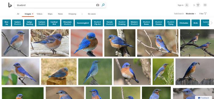 buscador de imagenes de bing