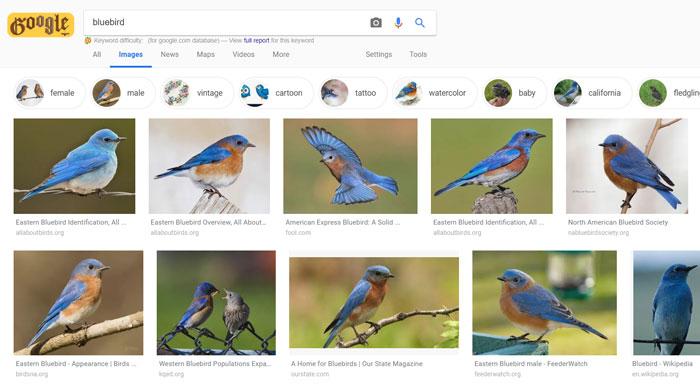 Buscador de imagenes gratuito